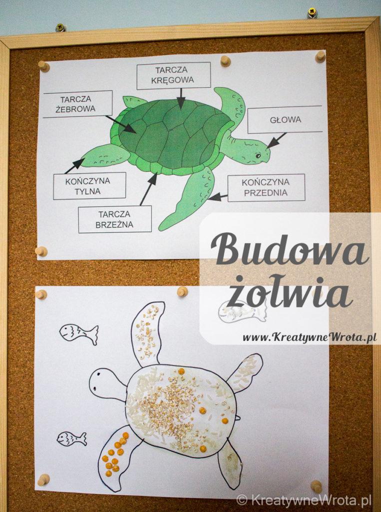 Budowa żółwia