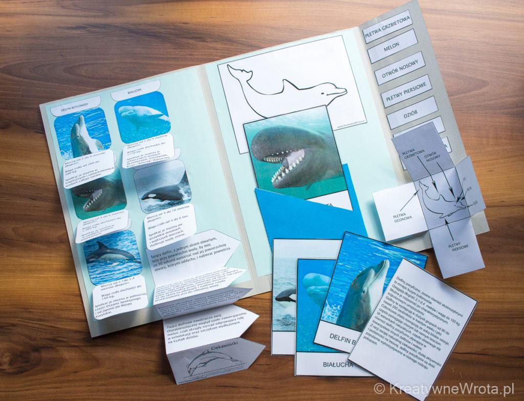 Lapbook - Delfiny