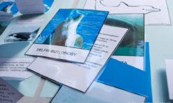 Lapbook – Delfiny