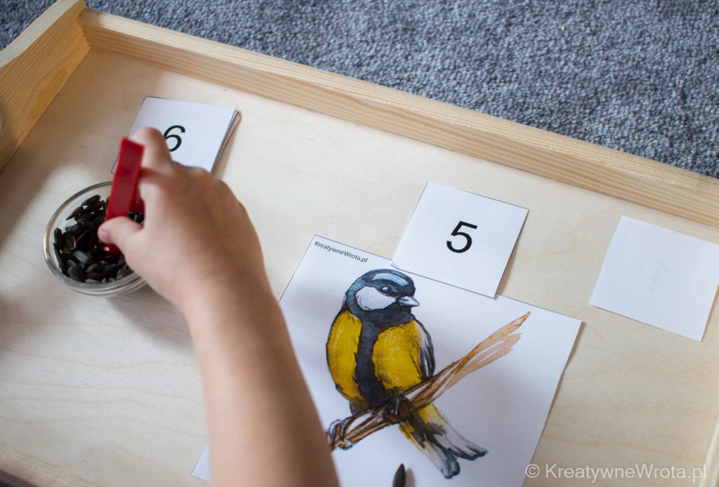 Program Montessori - Ptaki
