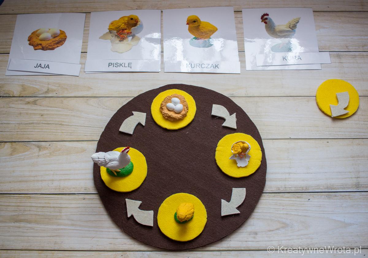 cykl rozwoju kury