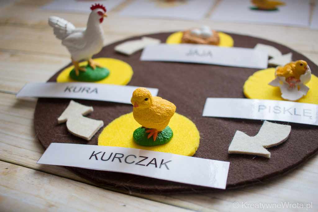 Montessori - ptaki